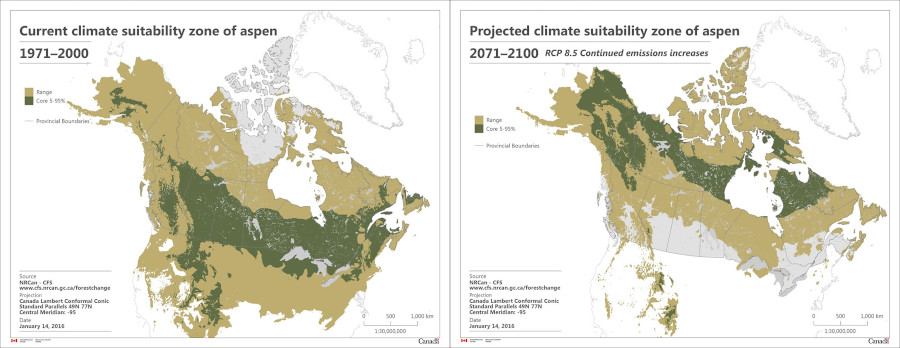 Current (1971–2000) versus projected (2071–2100) climate suitability zone of trembling aspen (Populus tremuloides). Image courtesy of Natural Resources Canada.