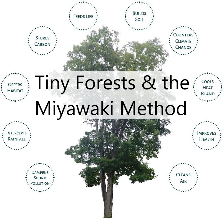 Miyawaki Forests: Image of tree with captions: Stores carbon, Feeds life, Builds soil, Counters climate change, Cools heat island, Improves health, Cleans air, Dampens sound pollution, Intercepts rainfall, Offers habitat