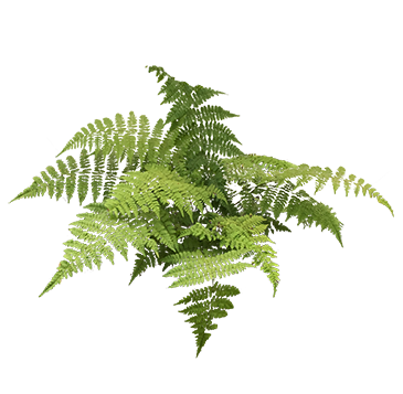 Pteridophytes (Ferns & Allies)